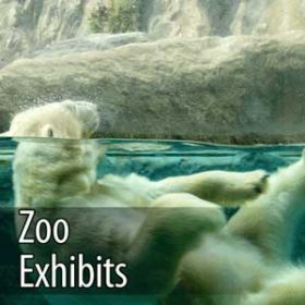 ozone for healthy and clean zoo exhibits