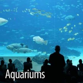 ozone for healthy aquarium water