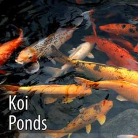 ozone for clean and healthy koi ponds